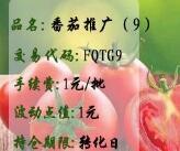 番茄推广(9)