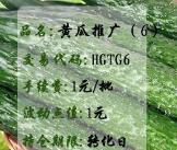 黄瓜推广(6)