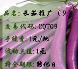 长茄推广(9)